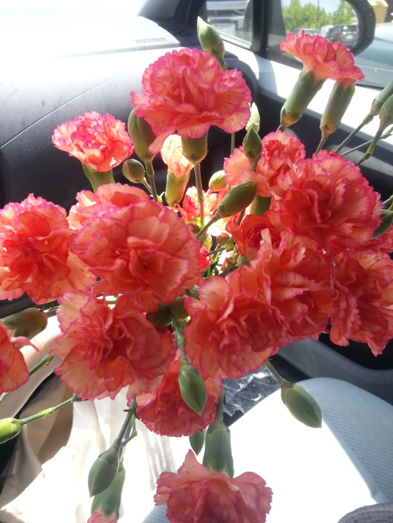 birthday carnations