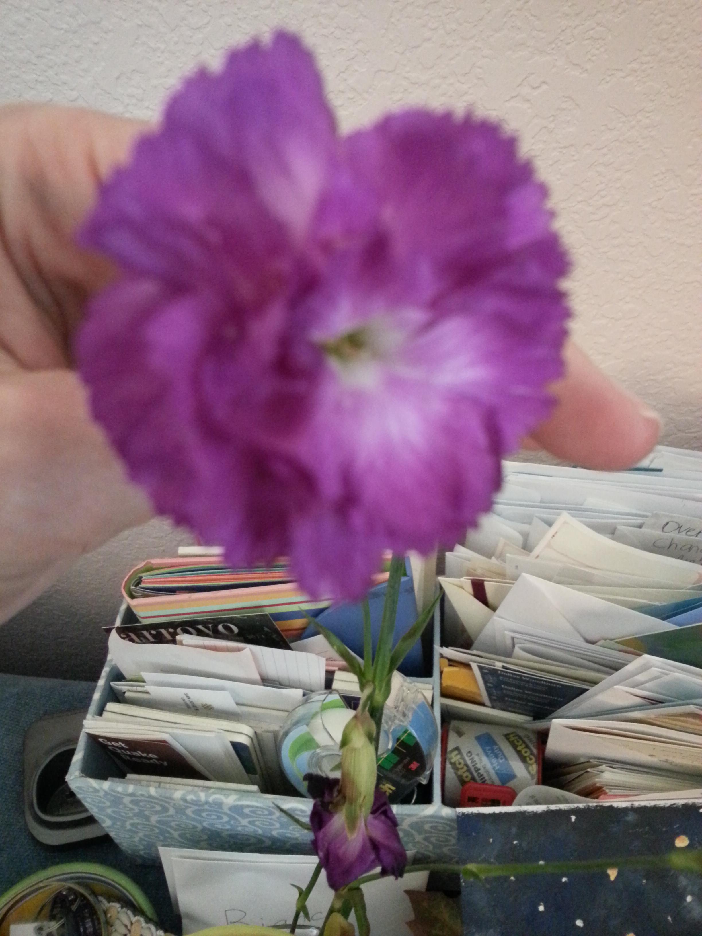 flower from grandma