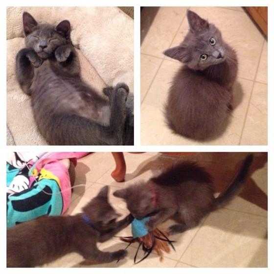 dana's kittens