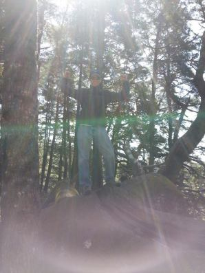allyn trees