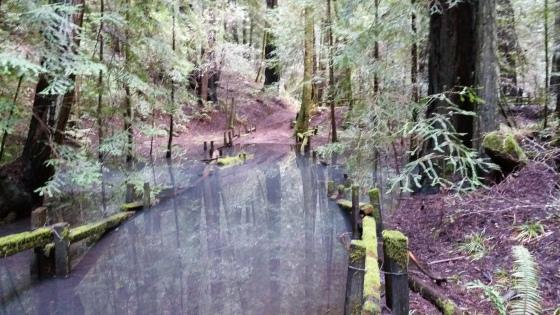 water-redwoods