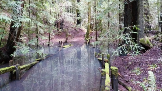 water-redwoods